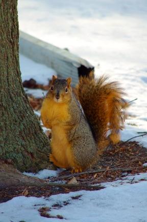 "December - ""I wish I hadn't eaten all the nuts!"""