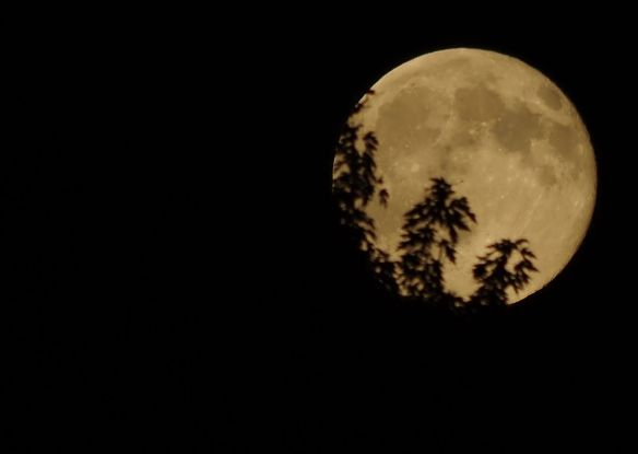 Blue Moon - 7/31/15